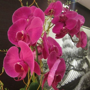 Orchids everywhere